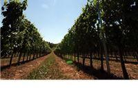 Rok za podnošenje zahtjeva za potporu za kapitalna ulaganja produžen do 30. studenog 2012. godine