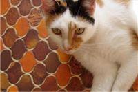 Ljubo R. Weiss: Netko voli pse, mnogi, i ja, volimo mačke….