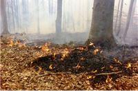 Na Papuku gorjelo nekoliko hektara bukove šume - požar ugašen nakon petosatne borbe
