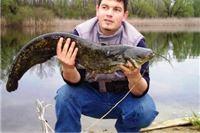 Ribići bistro! Sinoć na Limanu upecan somić dužine jednog metra