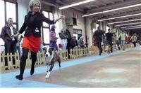 Ljubitelji pasa uživali prelijepim terijerima