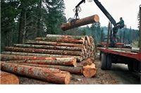 Šume u socijalizmu, a pilane u kapitalizmu