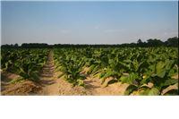 Obavijest proizvođačima duhana o pravilnoj uporabi sredstva za zaštitu bilja