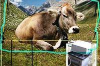 Sa livade u Jasenašu ukradeni električni pastiri