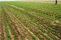 Poništen natječaj za dodjelu dugogodišnjeg zakupa na poljoprivrednom zemljištu u Pitomači