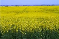Novi zakon o poljoprivrednom zemljištu uzbunio lokalne političare