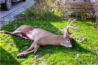 Udario u jelena, završio u jarku