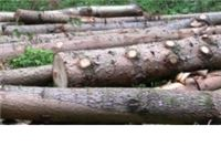 """Iz šumskog predjela """"Radaši klisa"""" ukradena drva"""