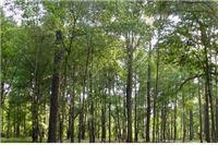 Rasprodaja šuma i voda nije stvar izbora nego nužde