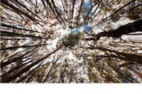 Još jedna krađa stabala iz šuma