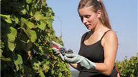 Grupacija vinogradarstva i voćarstva o aktualnom stanju u vinogradarstvu i vinarstvu