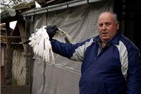 Pedeset godina s golubovima