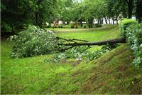 Vjetar prepolovio stablo u gradskom parku