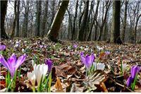 Ljubo R. Weiss: Kako sam prošao u Maksimiru?? (cvijetak berem, kaznu plaćam!)