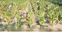 U petak okrugli stol i rasprava: Europske perspektive hrvatske poljoprivrede – izazovi i prilike