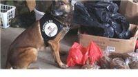 Policijski psi nanjušili 2 tone duhana