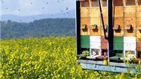 Za razvoj pčelarstva odobreno gotovo milijun kuna