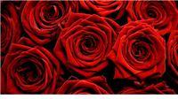 Čitateljicama portala Virovitica.net želimo sretan Dan žena
