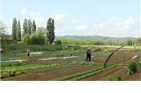 Javni poziv o iskazivanju interesa za dodjelu gradskih vrtova