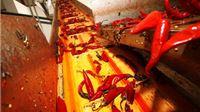 Šafram - Radovi na novoj proizvodnoj hali u Turanovcu