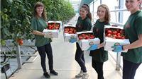 Domaće i zdravo: KTC rajčice - od berbe do polica za sat vremena