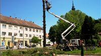 Uklonjen nagnuti bor koji je prijetio zgradi Mirovinskog osiguranja