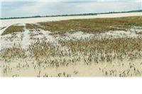 Preko trideset miliuna kuna štete od svibanjskih poplava