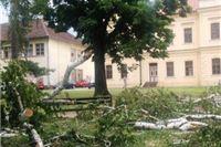 Slatina: Akcija uređenja stabala u Parku 136