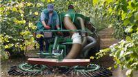 Poljoprivrednom kombinatu Orahovica u 2013.godini 9,2 milijuna kuna potpora