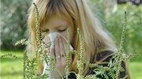 Više od 20% Virovitičana alergično na ambroziju