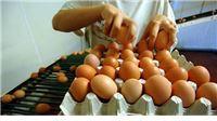 Uskoro sortirnica i pakirnica jaja u Kozicama