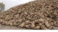 Viro i Sladorana snižavaju otkupnu cijenu šećerne repe
