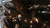 Savjet kupcima božićnih drvaca