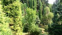 Arboretum Lisičine: Cvjetni mirisni raj s okusom gorčine!