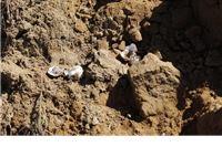 Zbog eksploatacije pijeska uništena gotovo cijela kolonija pčelarica