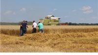 Pšenicu ne prodaju - već predaju zbog duga!