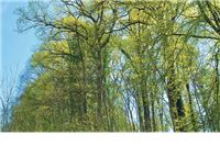 Vlasnicima šuma do milijun eura od EU