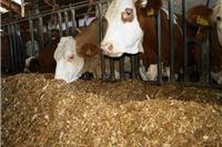 Najavljena osnivačka skupština Proizvođačke organizacije u mljekarstvu