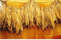 Pronađena tona nelegalnog duhana