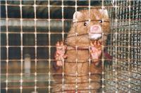 Kraj uzgoju životinja zbog krzna