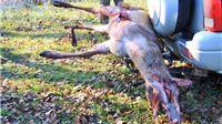 Na Međunarodni dan ljudskih prava Prijatelji životinja ukazuju na smrtonosne žice, ograde i kaveze