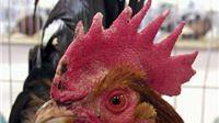 Ove godine Izložba malih životinja od 15. do 17. siječnja