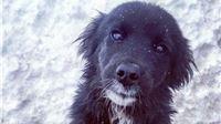 Sklonište za napuštene životinje: Vani je hladno, a boksovi su puni - Medi hitno potreban dom