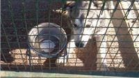 Strava u slatinskom azilu: Cviljenje pasa, česti sukobi i tučnjave, mrtva tijela u boksevima, prazne zdjelice vikendima i blagdanima
