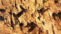 Bregunica postala ptica godine i ambasador rijeke Drave u Hrvatskoj