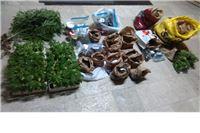 Policija kod 50-godišnjaka pronašla 128 biljaka indijske konoplje