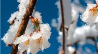 Proglašena elementarna nepogoda uzrokovana mrazom