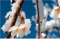 Na području Virovitičko-podravske županije, štete od mraza procijenjene na 87, 7 milijuna kuna