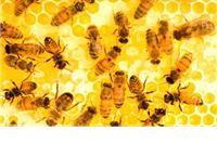 Pčelarima omogućeno pokriće dijela troškova pčelarenja