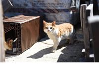 Međunarodni dan kastracije mačaka: Kastracija je nužna pomoć mačkama